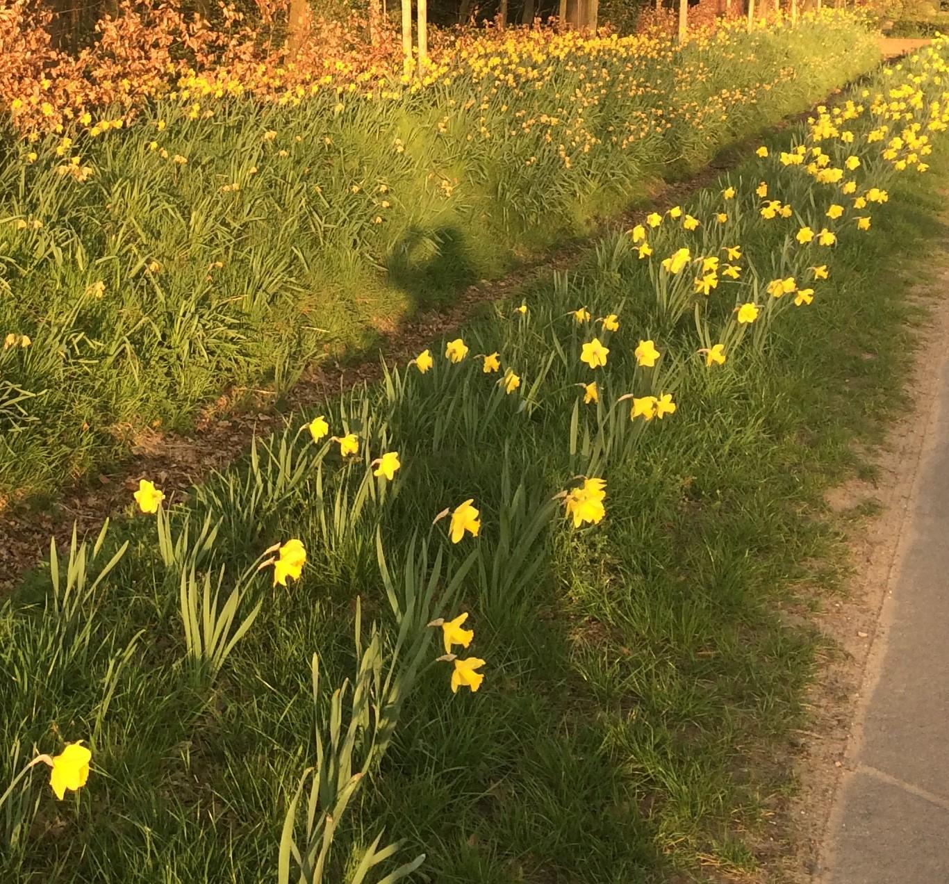 """Bürgerstiftung Plant Projekt """"17 000 Blumenzwiebeln Für Gescher"""""""
